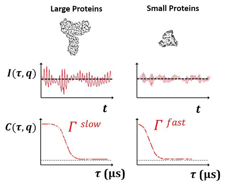 DLS Mabs Charts with Protein Comparison